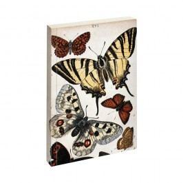 Zápisník Jay Biologica Butterfly